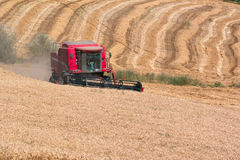Wheat harvest. With combine harvester Royalty Free Stock Image