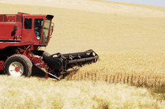 Wheat harvest 17. A combine harvesting the wheat crops in the rolling hills of the Palouse area of southeastern Washington state, summer 2006 Stock Image
