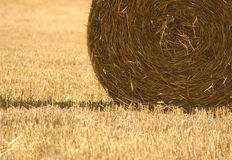 Wheat Harvest. Macro on harvested wheat Royalty Free Stock Photography