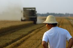 Wheat harvest Royalty Free Stock Image
