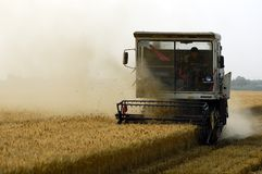 Wheat harvest Royalty Free Stock Photo