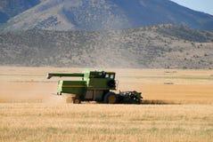 Wheat harvest Stock Photography