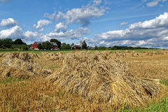 Wheat Harvest on an Amish Farm. A traditional Amish wheat harvest scene. The grain is cut, tied into bundles and set up in shocks to dry. Lancaster County Stock Photos