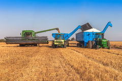 Wheat Harvest in Australia Stock Image