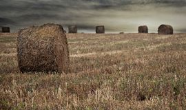 Wheat harvest Stock Images