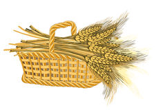 Wheat harvest in basket Stock Image