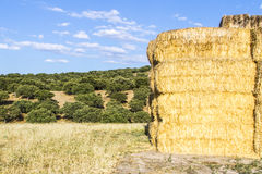 Wheat harvest, clouds, fields and landscapes Royalty Free Stock Photography