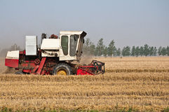 Wheat harvest Stock Photography