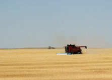 Wheat Harvest. A combine harvests wheat in July in Colorado royalty free stock image