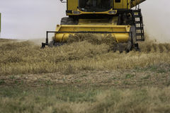 Wheat harvest combine tractor close Royalty Free Stock Photos