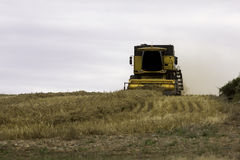 Wheat harvest combine tractor Stock Image