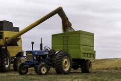 Wheat harvest combine and tractor Royalty Free Stock Images