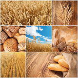 Wheat harvest concept Royalty Free Stock Images