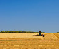 Wheat harvest on a field Royalty Free Stock Image