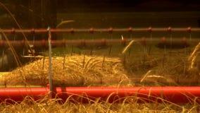 Wheat harvest field Stock Photography