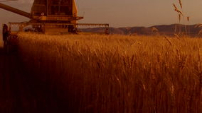 Wheat harvest field Royalty Free Stock Photo