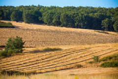 Wheat harvest, fields and landscapes Stock Images