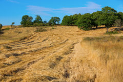 Wheat harvest, fields and landscapes Royalty Free Stock Images