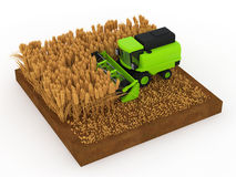 Wheat harvest. Harvested wheat in the combine Stock Photography