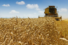 Wheat harvest. Er in action working at field Royalty Free Stock Photos