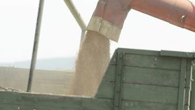 Wheat harvest with harvester-trasher stock video footage