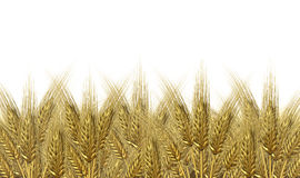 Wheat harvest horizon royalty free illustration