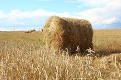 Sheaf of hay on the field in Siberia. The Wheat harvest in Krasnoyarsk region, Russia Royalty Free Stock Photo