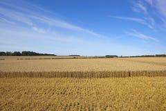 Wheat harvest landscape Stock Photography