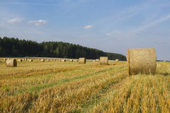 Wheat Harvest Landscape. In late August, 2013. Vogtland - Germany Royalty Free Stock Photos