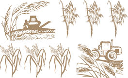 Wheat, harvest and machinery royalty free illustration