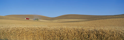 Wheat Harvest, near Steptoe, S.E. Washington Stock Photos