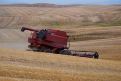 Wheat Harvest, Palouse, Washington Royalty Free Stock Image