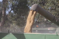 Wheat Harvest Pouring Into Grain Silo Royalty Free Stock Images