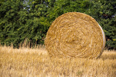 Wheat harvest time. Rolls of hay on the field, harvest time Stock Photos
