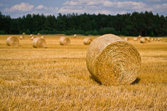 Wheat harvest time Royalty Free Stock Photography
