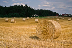 Wheat harvest time Royalty Free Stock Photos