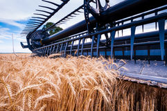 Wheat Harvest X Stock Photography