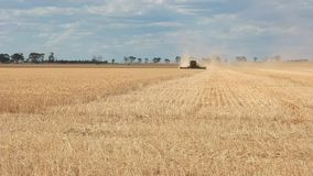 Wheat harvester wide angle view stock video footage