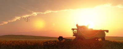 Wheat harvester. Working in wheat field Stock Photos