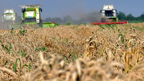 Wheat and harvesters stock video footage