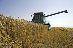 Wheat harvesting Stock Photo