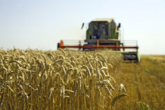 Wheat harvesting. Combine at wheat field is harvesting Royalty Free Stock Photography