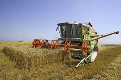 Wheat harvesting Royalty Free Stock Images
