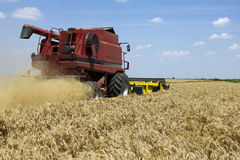 Wheat harvesting Stock Photography