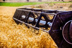 Wheat harvesting machine Royalty Free Stock Images