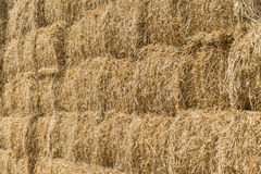 Wheat haystack Royalty Free Stock Images