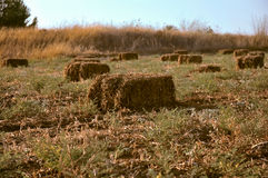 Wheat haystack . Stock Photography