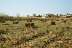 Wheat haystack . Royalty Free Stock Photo