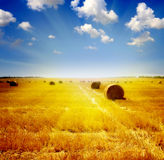 Wheat haystack landscape Stock Photo