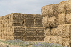 Wheat haystack Stock Images